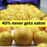 Lebensmittelverschwendung ist eines der dümmsten Probleme der Welt